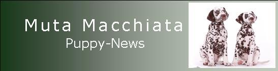 Muta Macchiata Puppy News